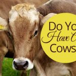 Do You Have Any Cows?