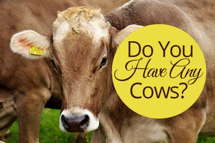 Do You Have Any Cows? | by Jamie Rohrbaugh | OverNotUnder.com